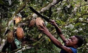 «Νόμιμα» προϊόντα δουλείας & ναρκωτικά …