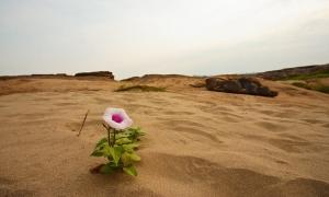 Όσια Μαρία Αιγυπτία: Το τριαντάφυλλο της Ερήμου